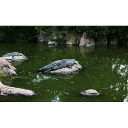 African Crocodile 1