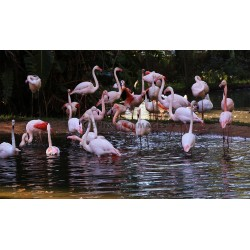 4 in one Flamingo Picture Bundle
