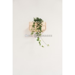 beautiful flower hanging on a white wall with a High resolution