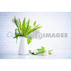 cool-flower-on-white-background with High Resolution